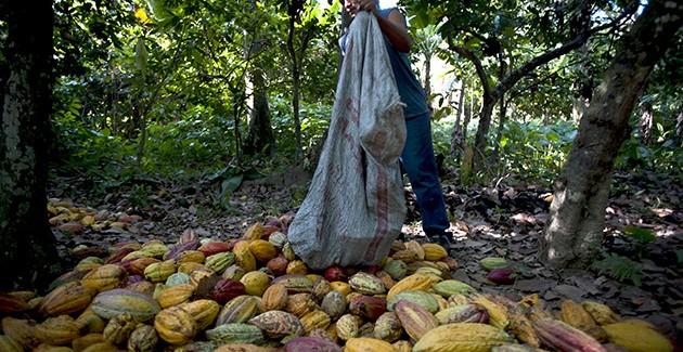 cacaoteros abasco México